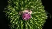 Pompöser Silberring mit Sternrubin - Foto: Raik Behr