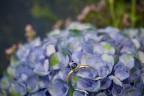 Goldring mit einem kornblumenblauen Saphir - Foto: Raik Behr